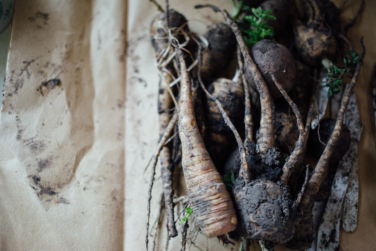 Close-up of root vegetables covered in mud