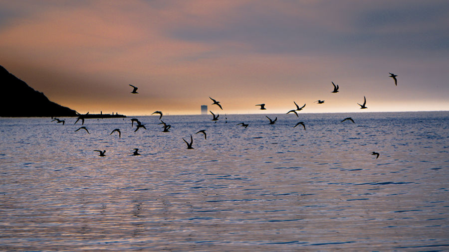 Birds Of EyeEm  Flock Of Birds Fly Animal Animal Themes Animal Wildlife Animals In The Wild Beauty In Nature Bird Birds Flock Of Birds Flying Group Of Animals Horizon Over Water Large Group Of Animals Mid-air No People Scenics - Nature Sea Seagull Sky Sunset Vertebrate Water Waterfront