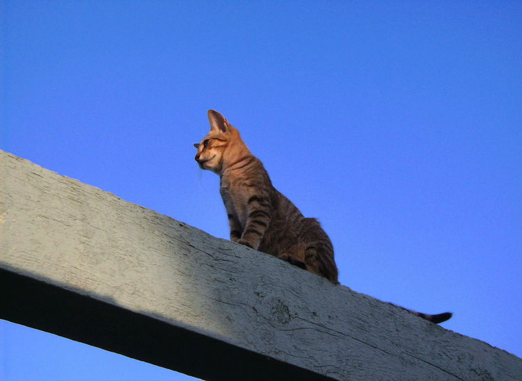 A look beyond. Cat Cats Cat Life Wood Wooden Beam Beam Sky Sky Blue Blue Sky Sky Blue Sky Blue View From Below Below From Below My Point Of View A Look Beyond Looking Ahead