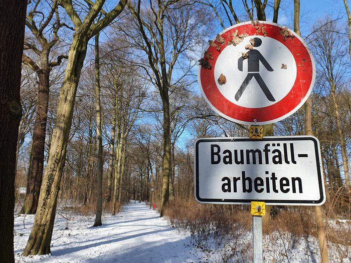 Road sign by trees on snow during winter