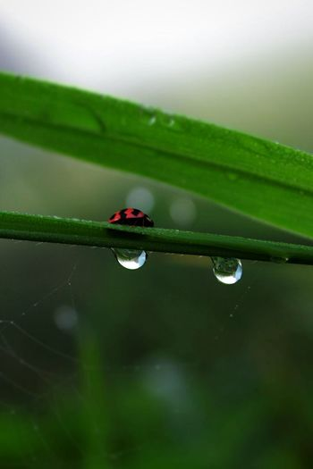 bug Water