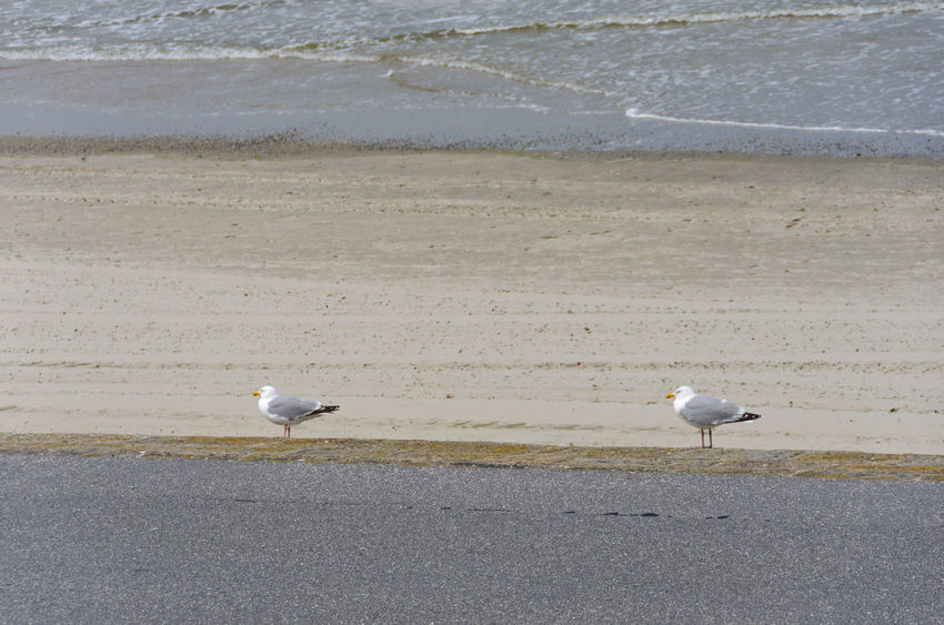 PaarWeise Animal Animal Themes Animal Wildlife Animals In The Wild Beach Bird Day Group Of Animals Land Minimal Minimalism Minimalistic Minimalmood Minimalobsession Nature No People Sand Sea Seagull Two Animals Vertebrate Water
