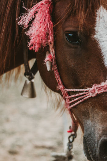 Close-up of a horse with a bell