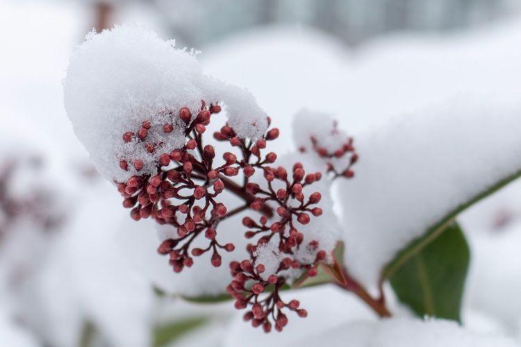 Snow hat Snow