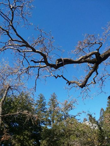 Trees Branches Nature Framing Phoneography Scenic Tree Blue Sky