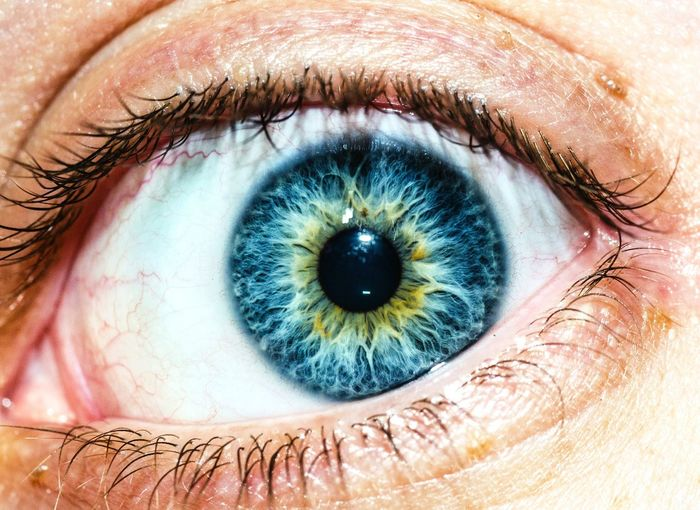 Close-up of blue human eye