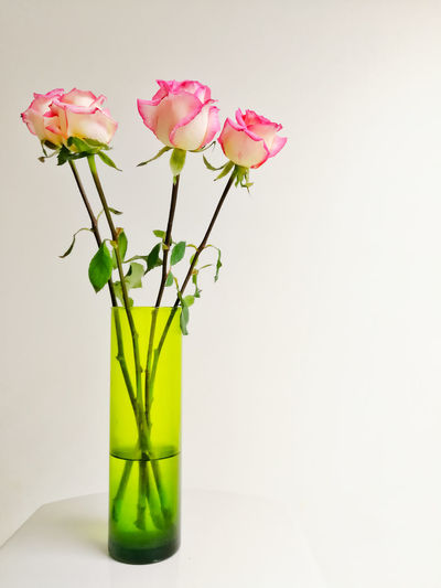 Beautiful rose in green vase. Flower Head Flower Bouquet White Background Leaf Vase Peony  Studio Shot Plant Green Color In Bloom Blooming Blossom