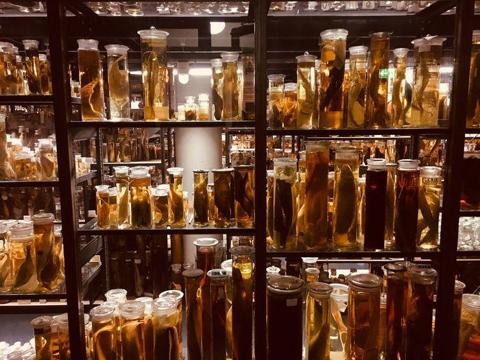 Various specimens in jars at laboratory