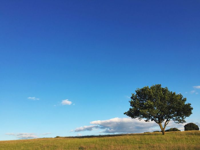 Tree On Grassy Field Against Blue Sky
