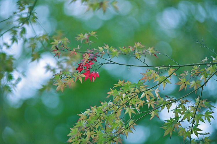 おはようございます😁 EyeEm Nature Lover Morning The Beauty Of Fall EyeEm Gallery Eye4photography  To Take Off Daily Hanging Out Hagging A Tree Fall Leaves EyeEm Best Shots - Autumn / Fall Red Leaves