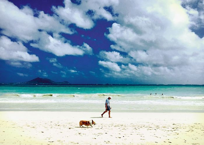 Man walking with dog on beach against sky
