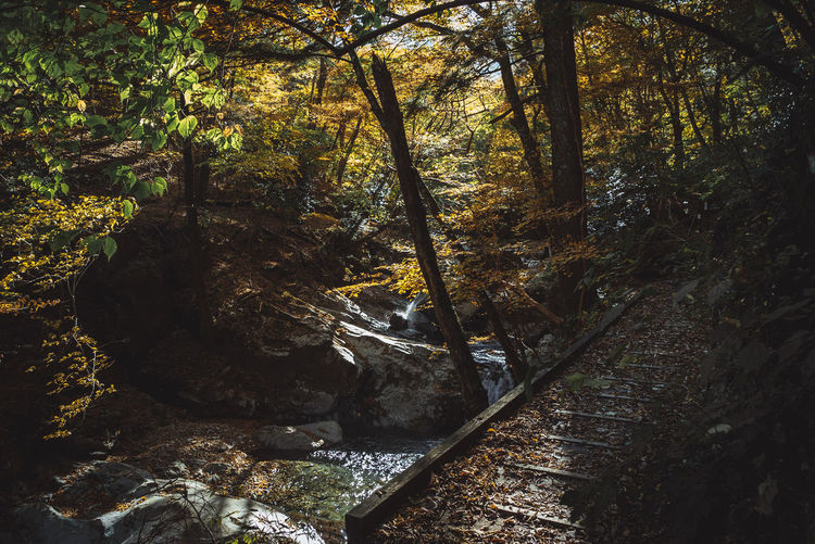 The Great Outdoors - 2018 EyeEm Awards Beauty In Nature Day Flowing Flowing Water Forest Growth Land Nature No People Non-urban Scene Outdoors Plant Rock Rock - Object Scenics - Nature Solid Stream - Flowing Water Tranquil Scene Tranquility Tree Tree Trunk Water WoodLand