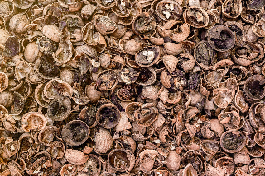 Cracked nuts infected with mold Bad Condition Mold Nuts Abundance Backgrounds Bad Close-up Corupted Cracked Day Decayed Defaced Full Frame Infected Large Group Of Objects Mildew Mold Food Mold Mould Mouldy Nature No People Nuts And Seeds Nuts On The Ground Nutshell Outdoors Putrid Rotten