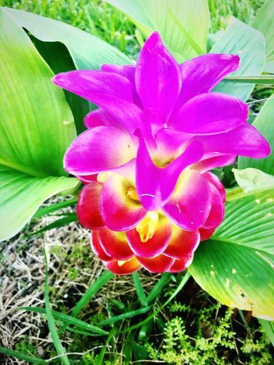 Flower Beauty In Nature Nature Outdoors Freshness Fragility Flower Head Blooming Nature Nature Harmony Nature Geometry