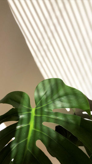 Close-up of leaves on table against wall at home