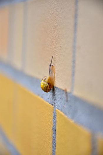 Paint The Town Yellow Snail Climbing Wall Schnecke Schloss Bellevue Yellow Yellow Snailhouse Gelb