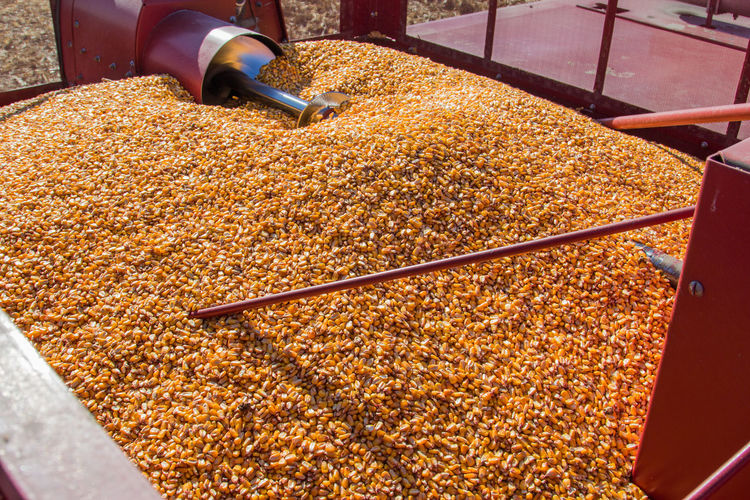Agricultural Machinery Agriculture Auger Autumn Canon60d Canonphotography Case-ih Combine Combine Harvester Corn Crop  Fall Grain Grain Tank Harvest Harvesting Kernel Red Yellow