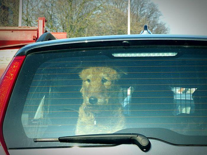 Dogs EyeEm Nature LoverCrazy Animals  Streetphotography Urbanexploration Capture The Moment