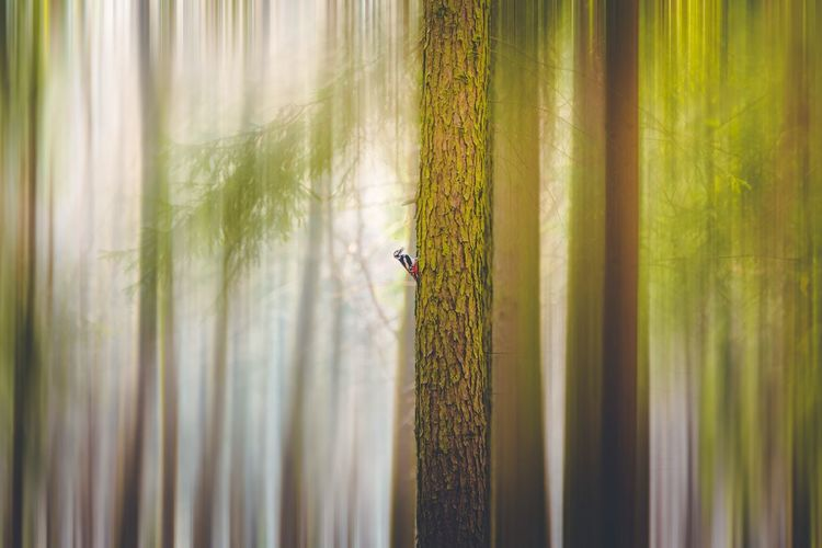 From safe a distance EyeEm Selects EyeEm Gallery EyeEm Best Shots Fine Art Photography Forest Bird Woodpecker Plant Growth Day Nature One Animal Beauty In Nature Animal Green Color Animals In The Wild
