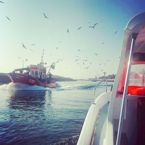 fishing timeLagos Bluefleet .ptCavalas Peixeporco Sargos