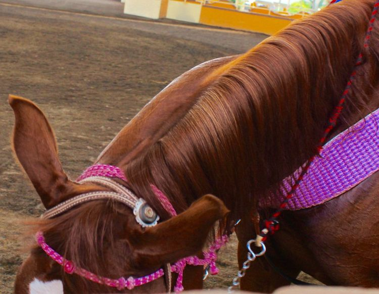 Horse Horses Head Horses Head :D Lienzo Charro Mexico Pink Color