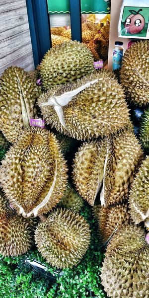 High angle view of cactus for sale in market