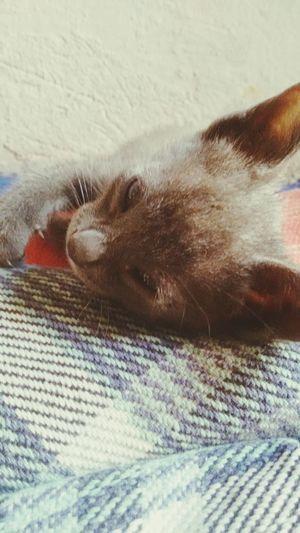 Meu novo bebe ..😊😊😊😊😊😆😆😆😍😘
