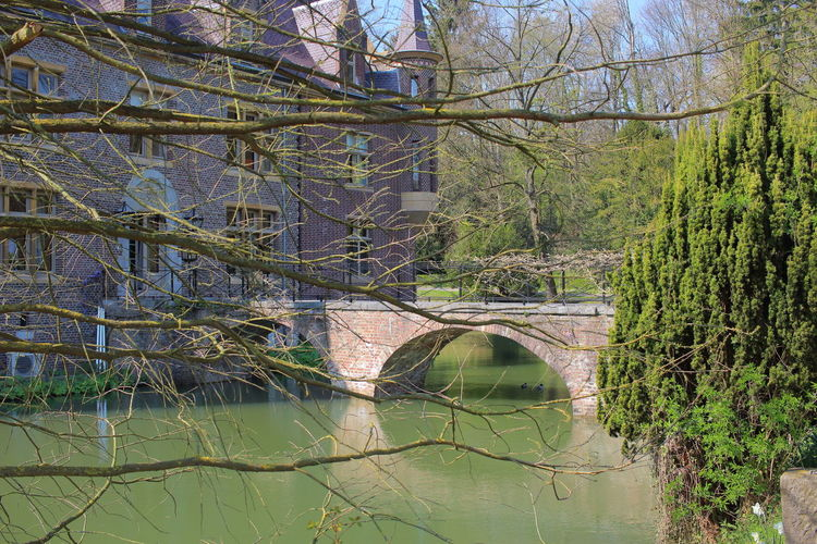 EyeEm Nature Lover Spring Water Tree Plant Reflection Nature No People Growth Connection Tranquility Architecture Bridge Day Built Structure Forest Green Color Beauty In Nature Bridge - Man Made Structure Outdoors Arch Bridge