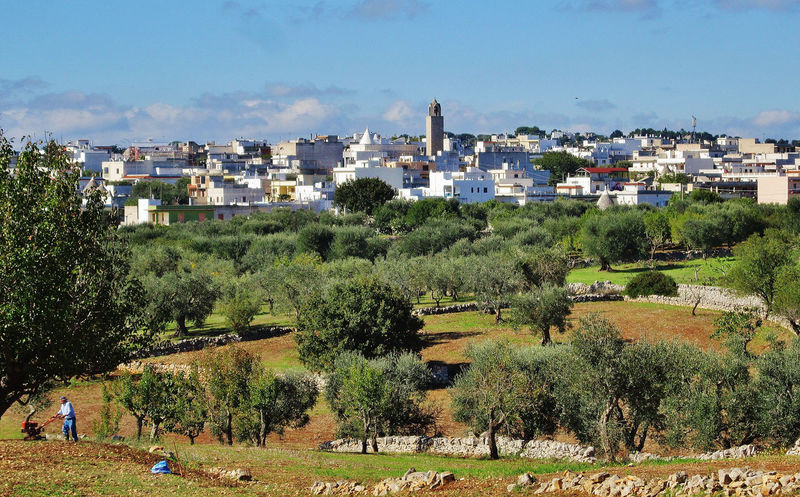 View of Casalini, countryside with olive trees in Puglia, Italy Agriculture Casalini Cisternino Mediterranean  Nature Ostuni Puglia Rural View Countryside Field Italy Landscape Landscapes Nature Olive Trees Outdoors Summer Tree Valle D'itria Yellow Field