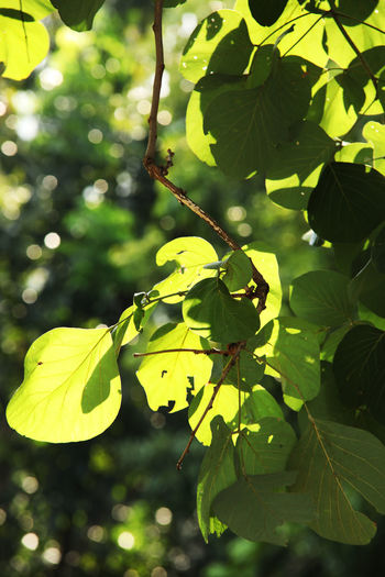 Beauty Of Nature Green Color Leaf Leaf On A Tree Leaf Photography Leaves Leaves On A Tree Leaves Photography