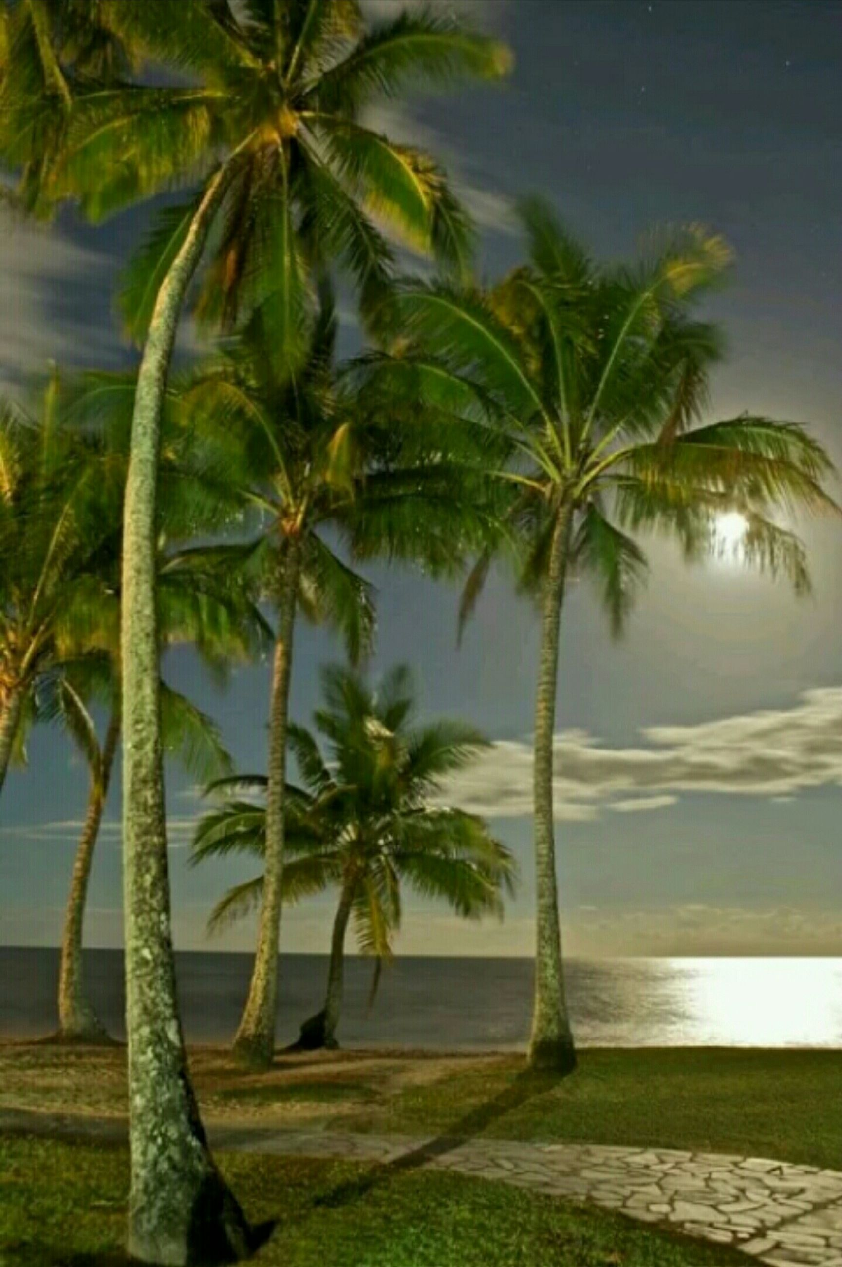 palm tree, tree, growth, tranquility, water, nature, sea, tranquil scene, beauty in nature, tree trunk, scenics, green color, sky, beach, plant, day, idyllic, outdoors, horizon over water, branch