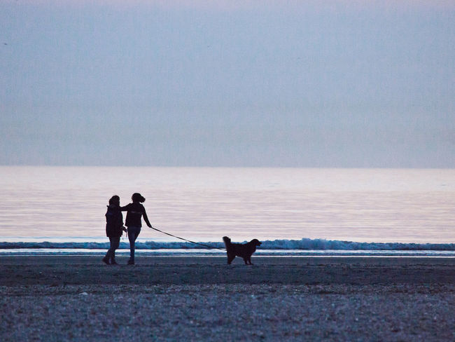 Evening Walk On The Beach Animal Themes Beach Beach Activities Beach Activity Beachphotography Beauty In Nature Canine Dog Evening Walk With The Dog Friendship Horizon Over Water Pet Owner Pets Real People Sea Seascape Silhouette Sky Water