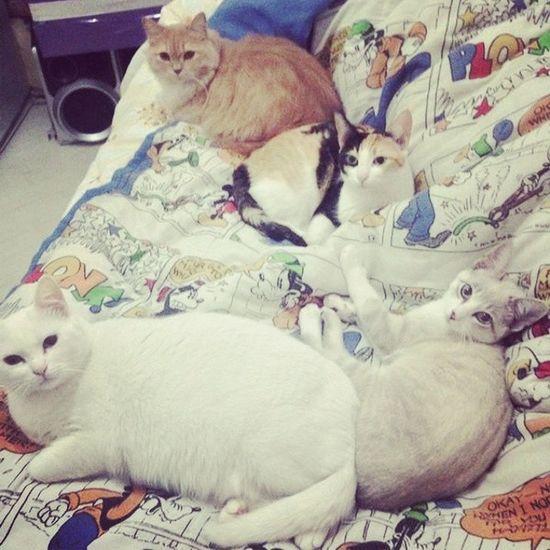 4 Amores  Ayla  Theo Mel & Nina ... foram os outros que eu tenho ;) rs amoo mt gato.... amo os bicnhinhus... enfim Animais_i_love_you