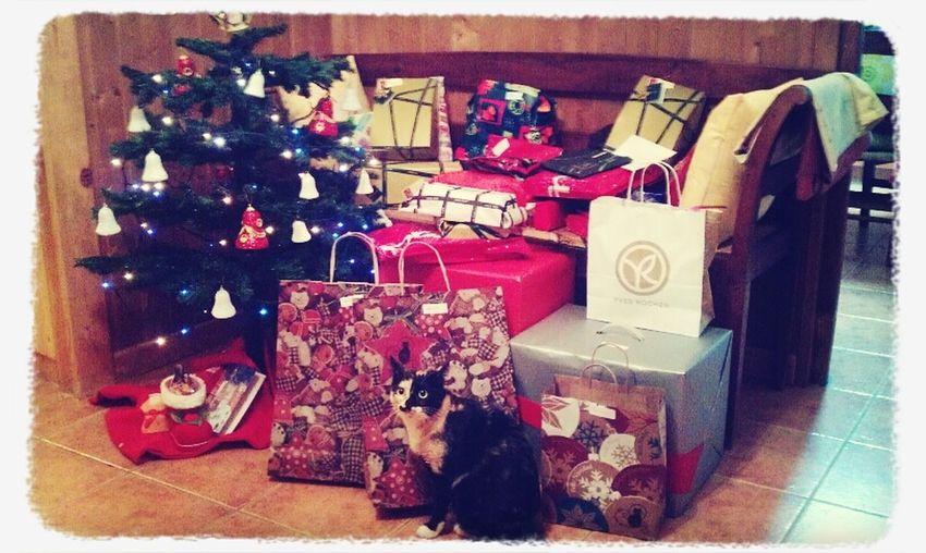 Ya ha llegado Papá Noel! Pet Navidad Regalos Cute Pets BlitzCat