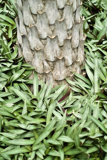 Backgrounds Close-up Day Freshness Full Frame Green Color Growth Nature No People Outdoors Plam Plant Tree