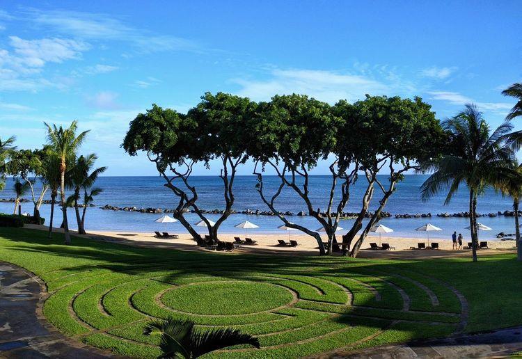 the Westin @Mauritius Beach, Sea, Seascape, Tree Nexus6P