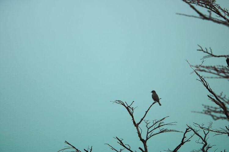 A Bird on a
