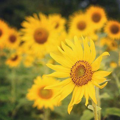 Instatravel Instadaily Happy Summer Sunshine Instagood Love Travel Everydayasia Flowers