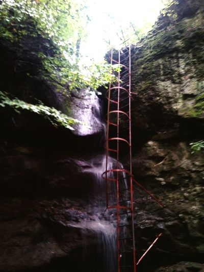 Ladder Waterfall Trees