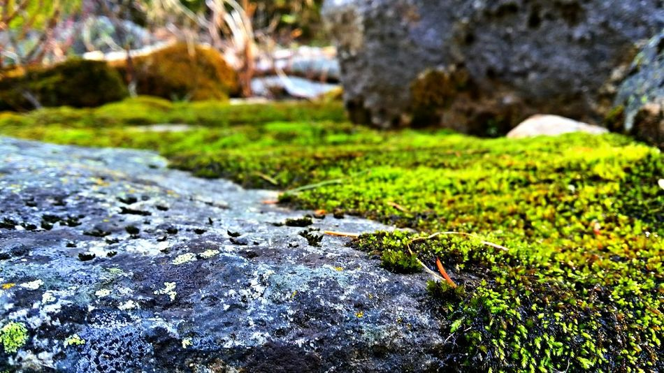 Moss. Camping Nature_collection Eyem Nature Lovers
