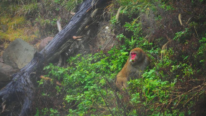 Wildlife Monkey Primate Green Color Scenics Nature Beauty In Nature Red Face Monkey Water Mist