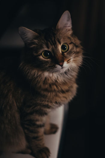 Elegancy Animal Animal Body Part Animal Eye Animal Themes Cat Close-up Domestic Domestic Animals Domestic Cat Feline Home Interior Indoors  Looking Looking At Camera Mammal No People One Animal Pets Portrait Vertebrate Whisker