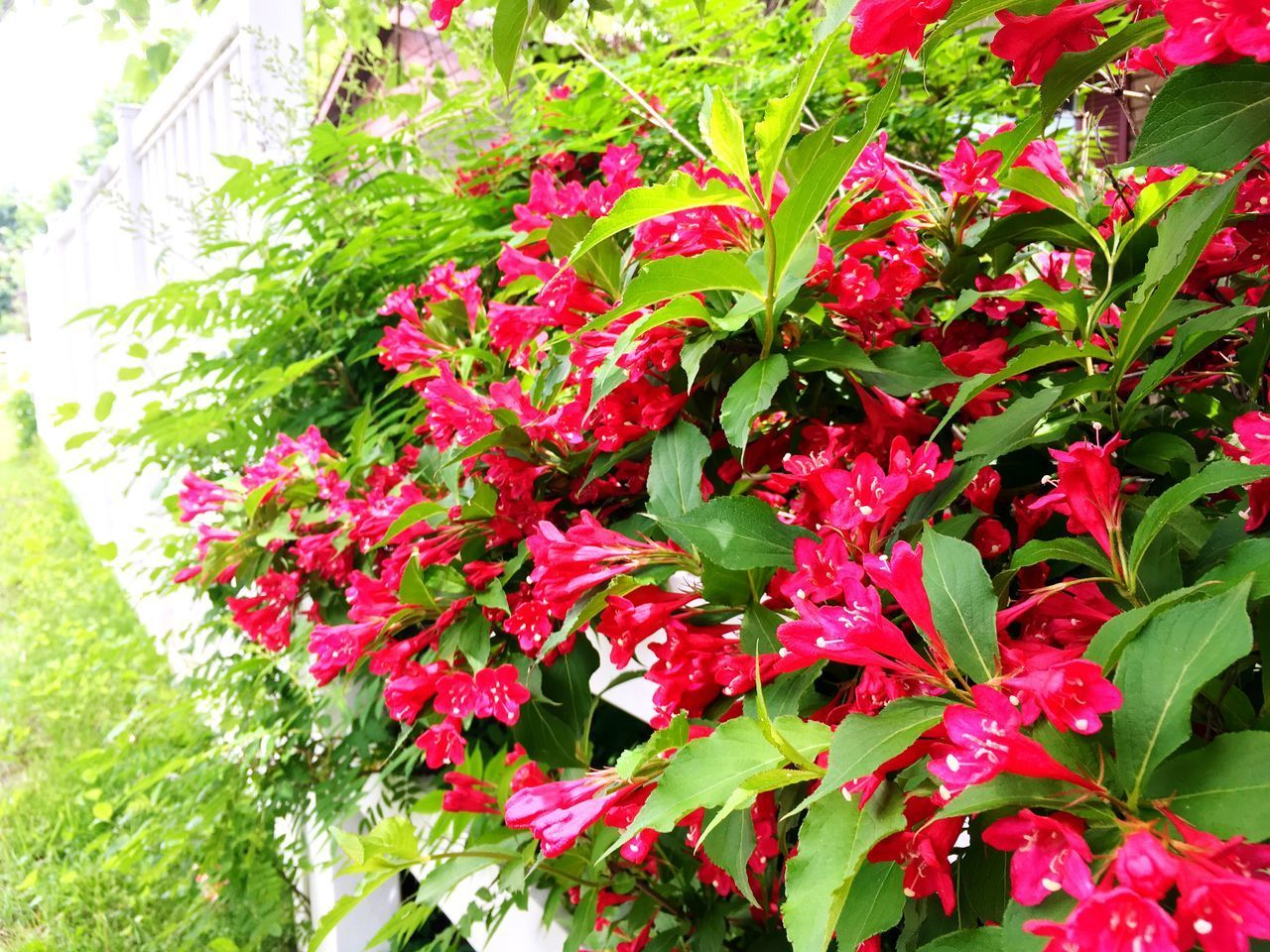 growth, red, nature, plant, foliage, leaf, spring, summer, flower, beauty in nature, no people, outdoors, freshness, day