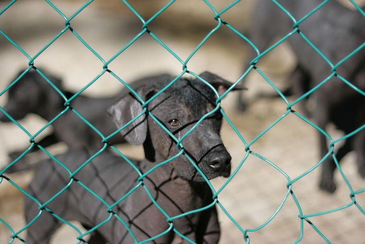 Close-Up Of Puppies Seen Through Chainlink Fence