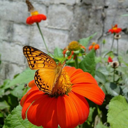 Killing the time Taking Photos Beautiful Flowers Butterfly Purist No Filter
