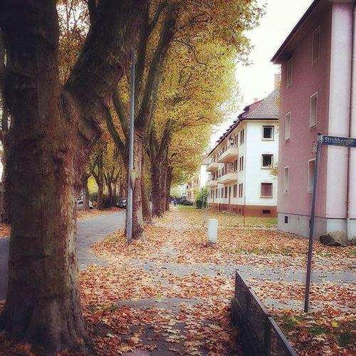 Oktober... Herbst Autumn Gelbeblätter Herbstlich Осень2015 октябрь