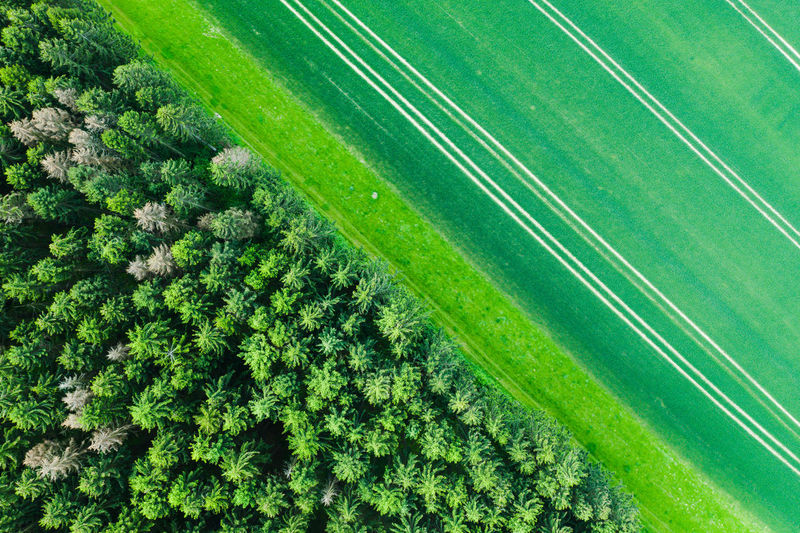 Green Color Plant No People Day Nature Aerial View Growth High Angle View Agriculture Land Tree Full Frame Outdoors Backgrounds Beauty In Nature Sport Tranquility Tranquil Scene Field Grass