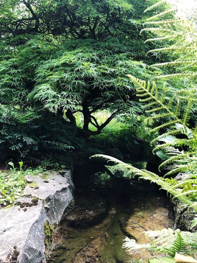 Plant Nature Day Sunlight Growth Tree Green Color Water Beauty In Nature Grass Forest Tranquility