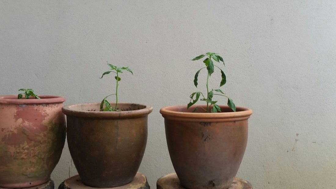 Negative Space White Green Plants Tumblr