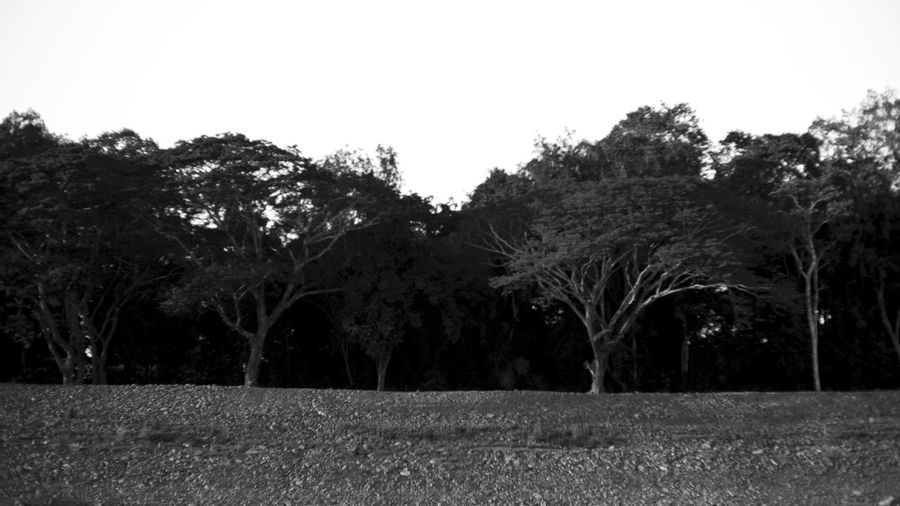 Agriculture Blackandwhite Clear Sky Growth Landscape Light And Shadow Nature Scenics Tranquil Scene Tranquility Tree
